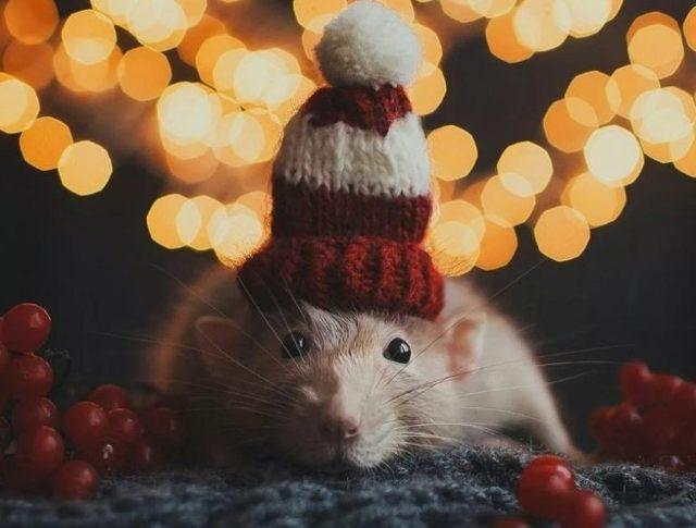 Что подарить на Новый год Крысы (Мыши) 2020: список подарков